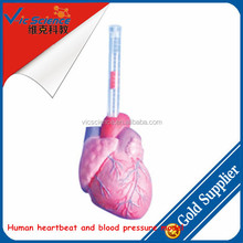 Human heartbeat and blood pressure model