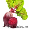 Natural Ingredient High Quanlity Beet Root Extract