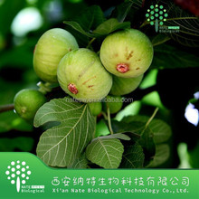100% Natural Fig Extract/ Ficin/Ficus Carica Extract