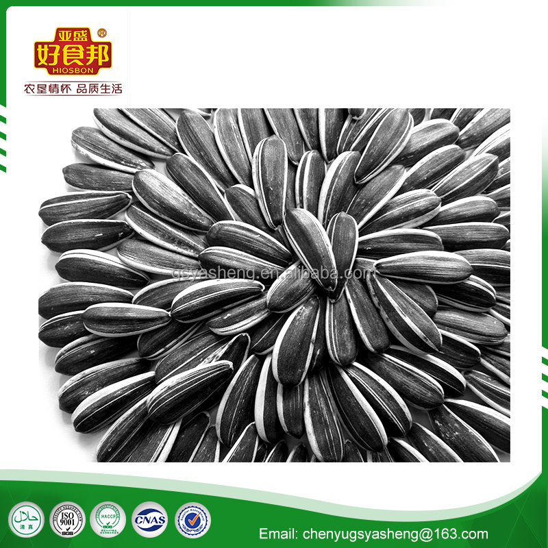hot sales top quality 5009 chinese sunflower seed price