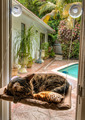 Cat Window Seat Pet cat hammock