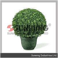 ornamental plants decorative topiary boxwood house decoration