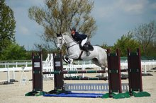showjumping services