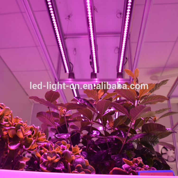 grow lamp best seller led tubes t5 grow light lamp use in plant factory ,hydroponic factory