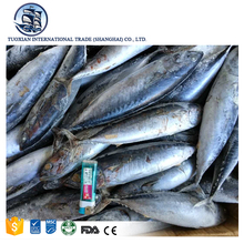 Wholesale frozen bonito fish from china seafood products