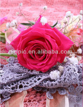 3d picture of beautiful rose