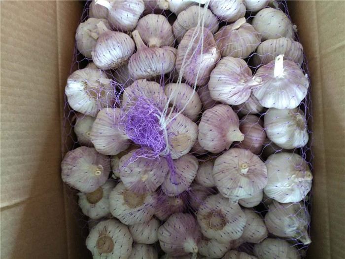 Chinese natural fresh pure white garlic price