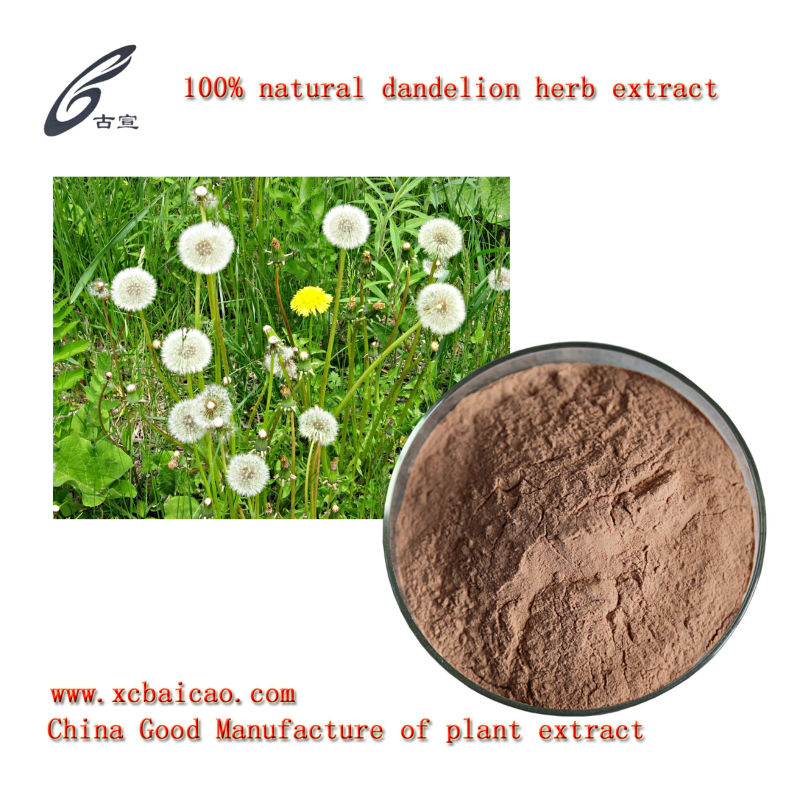 GMP factory provide Dandelion herb Extract(active ingredients) Herba Taraxaci P.E