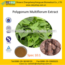 GMP Manufacturer Supply Natural Polygonum Multiflorum Extract
