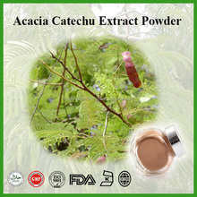 High Quality 10:1 Acacia Catechu Extract Powder