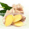 Bulk Sale Fresh Ginger Export to Kuwait