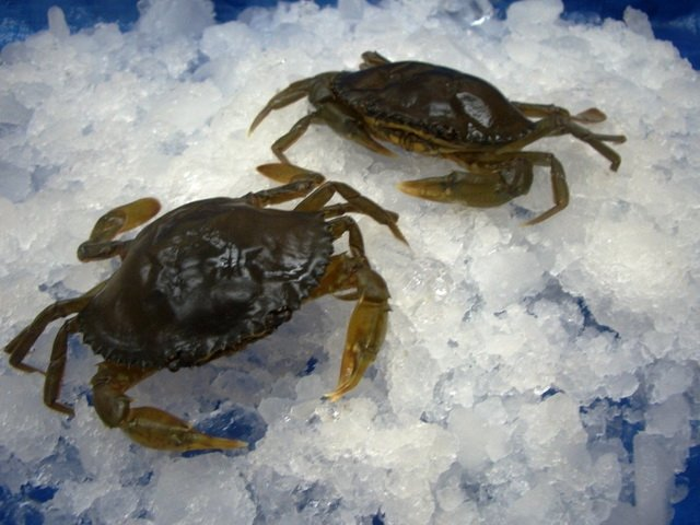 Frozen whole cleaned soft shell crab