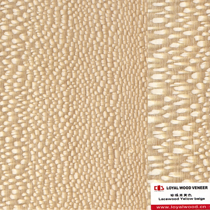 Good Quality Dyed Yellow Beige Lacewood Veneer for Panel