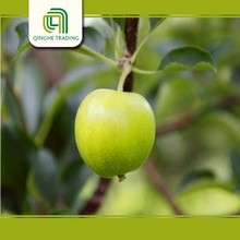 cheap types of green apples for sale