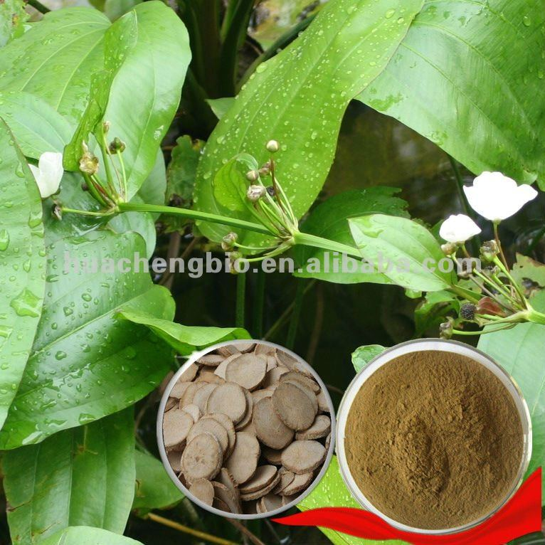 100% Natural Alisma Extract