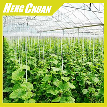 China Best inflatable greenhouse