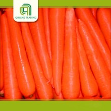 Hot selling china fresh carrots 2016 carrot with low price