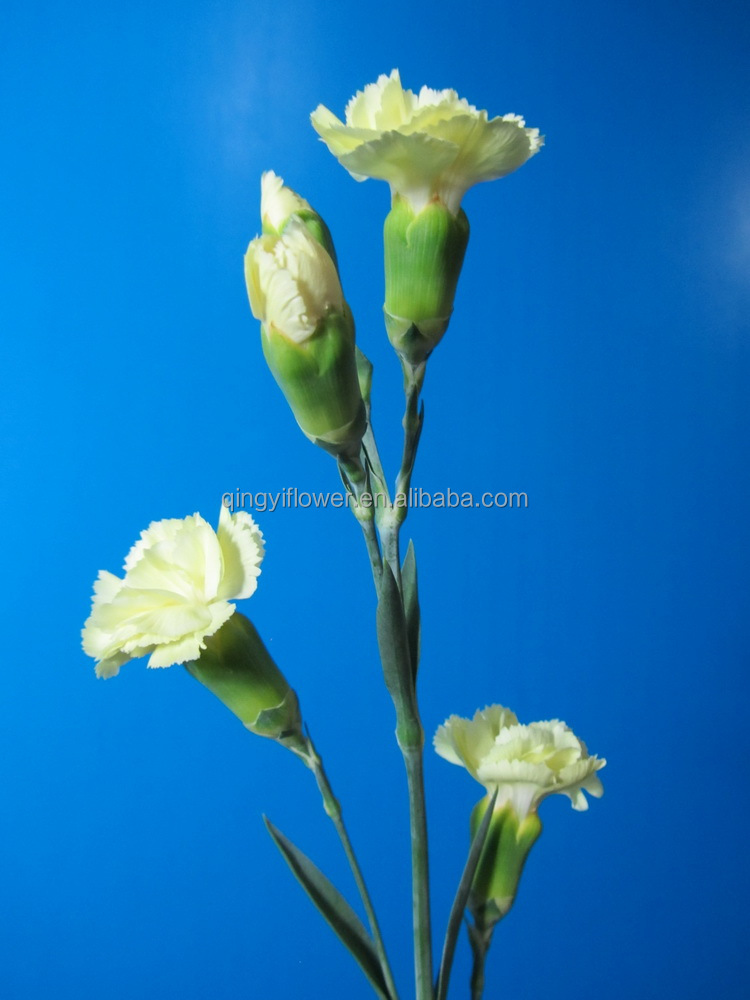 Alibaba china best selling types of spray carnation