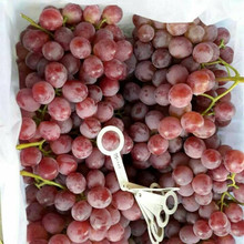 fresh grape price seeded organic grapes