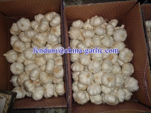 High Quality Fresh Style Pure White Garlic from Shandong, China