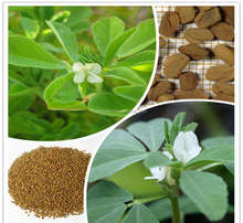Wholesale Price Fenugreek Saponins Extract/Trigonella foenum-graecum L Extract