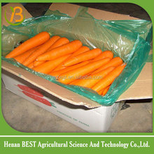 hot sale cheap carrots from shangdong