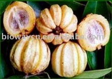 Garcinia Combogia P.E-.Hydroxy citric acid(HCA) 50%