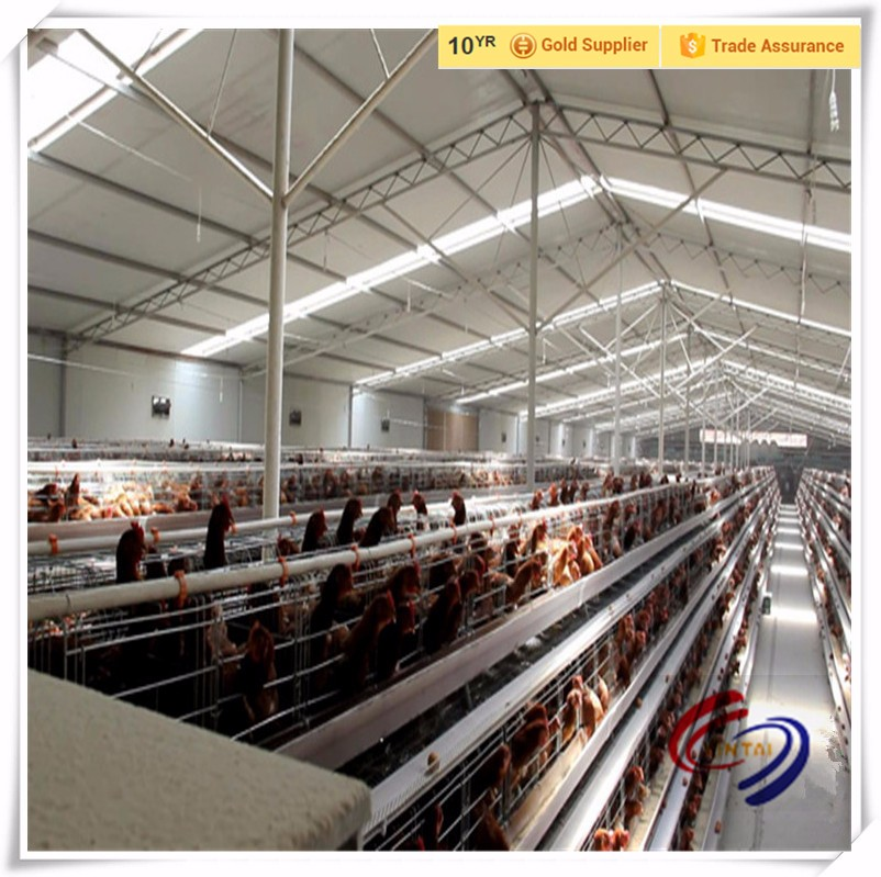 Chicken farm supply PP poultry manure belts