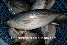 export seafood fish wholesale frozen skipjack whole round, sea food frozen skipjack tuna price