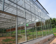 Multi Span Glass Greenhouse for Vegetables Plantation