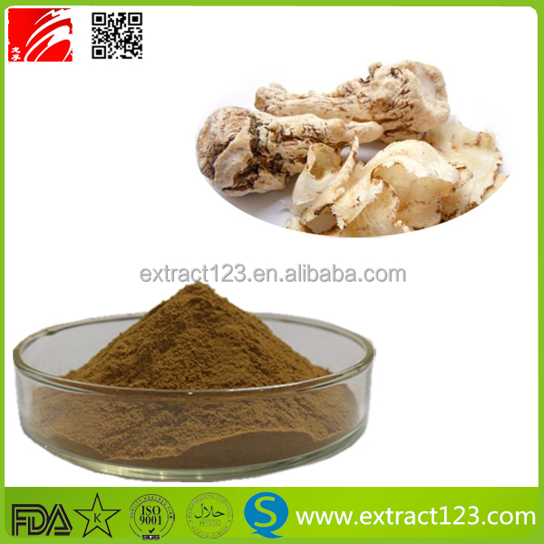 Free Sample angelica sinensis root extract powder,1% Ligustilide
