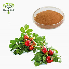 Hot Sale Natural Raw Material Rose Hip Extract Powder