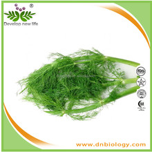 plant extract Fennel Extract, Foeniculum Vulgare extract improving digestive system