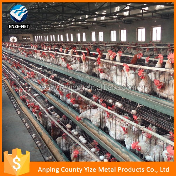 Professional manufacturer laying chicken cages Poultry Farming Equipment/ commercial chicken cage( Factory price)