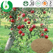 Plant Extract Apple Tree Bark Extract for Cosmetic