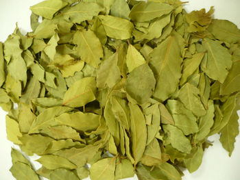 La feuille de laurier,Bay Leaves,Lauraceae, Defne Defne, Bay Leaf ,Sweet Bay, Aldera Dis Ticaret Co. Semi-Processed Bay Leaves