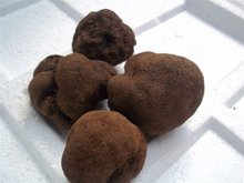 Blace fresh truffle