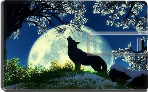 Wolf Howling Moon Night Flowers 16G USB Flash Drive 2.0 Memory Stick MSD USB Credit Card Size Customized Support Services Ready