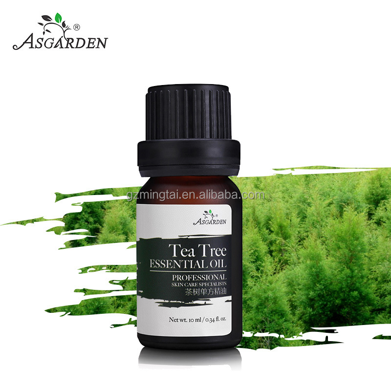 Leaves Raw Material and Pure Essential Oil Type essential oil tea tree