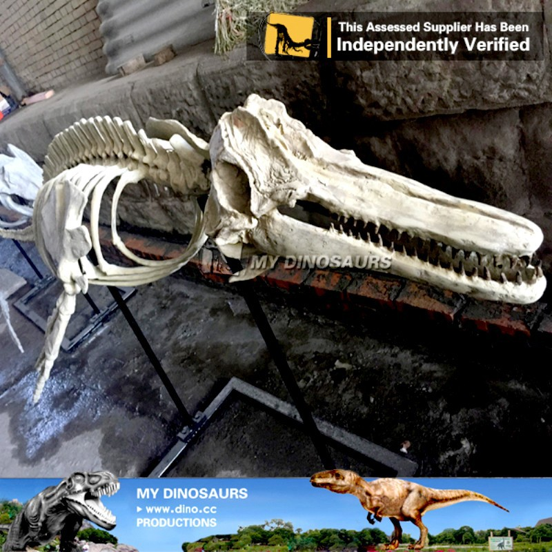 MY Dino-J16 Life size animal skeleton dolphin skeleton replica