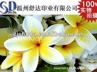 Best Seller Beautiful Flower 3D Picture/3D Photo Poster