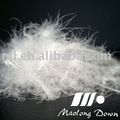 Washed White Duck Feather & Duck Down (70% Feather, 30% Down)