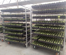 EL-717 plant nursery trolley