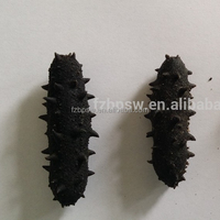 Organic non-pollution Stichopus japonicus,prickly/ spiky / spiny / thorny dried sea cucumber price