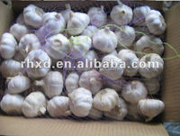 pure white and natural white fresh garlic factory directly from Qingdao China