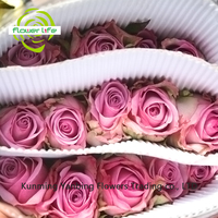 Home& Wedding Decoration China Holland Rose Cool Beauty With 60-80cm Long Stem China Clean Rose Cool Beauty From Yanbing/Yunan
