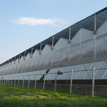 High quality PC sheet single multi span tunnel greenhouse