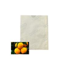fresh fruit orange growing Tree paper bag