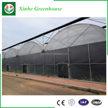 Multi-span Plastic Film Commercial Greenhouse,aquaponics system,farm irrigation systems,greenhouse plastic film