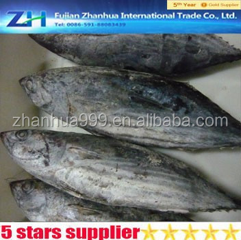 seafood frozen whole round bonito tuna fish skipjack
